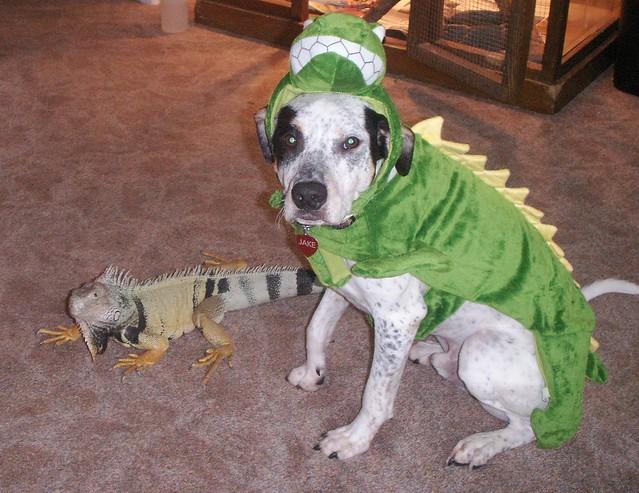 Lizard Dog