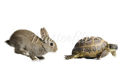 640-02768699 tortoise wins