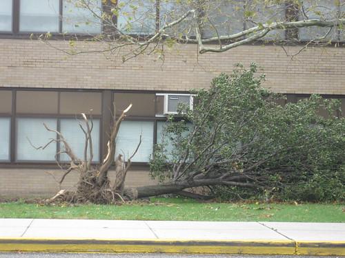 "Hurricane Sandy"" North Babylon High School"