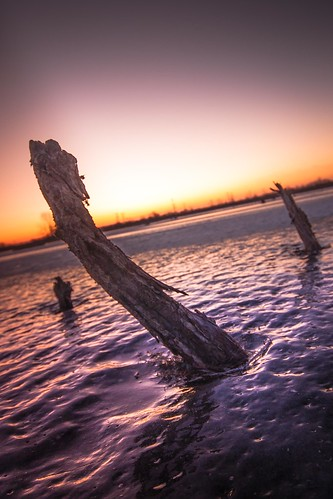 plants lake ice sunrise canon twilight 500d sigma1020 eastbranch forestpreservedistrictofdupagecounty t1i fpddc kevinrodde kevinroddephoto kevinroddephotography