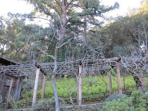 Hakone Japanese Gardens, Saratoga, CA IMG_2368
