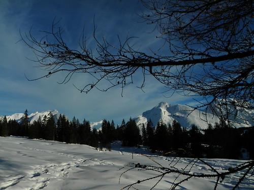 Mélèze et paysage