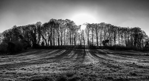 trees blackandwhite sun sunlight white black field noir afternoon fuji hampshire blanc x100 tichbourne
