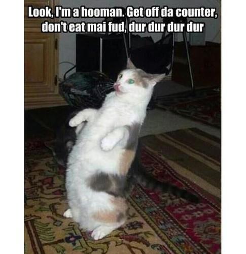 Was Katzen so machen, wenn wir nicht zuhause sind.