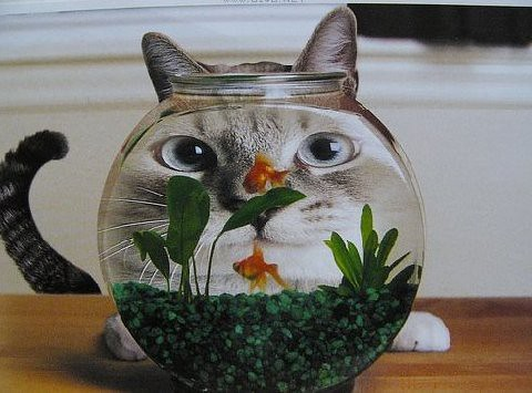 fishbowl cat
