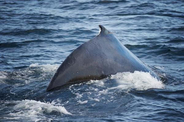 RYALE_Antarctica_Whales-4