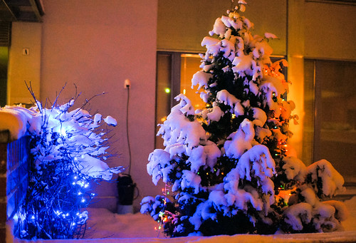 xmas winter snow suomi finland evening twilight ilta vaasa vasa joulu ostrobothnia kuusi hämärä sprucevasaostrobothniafinland