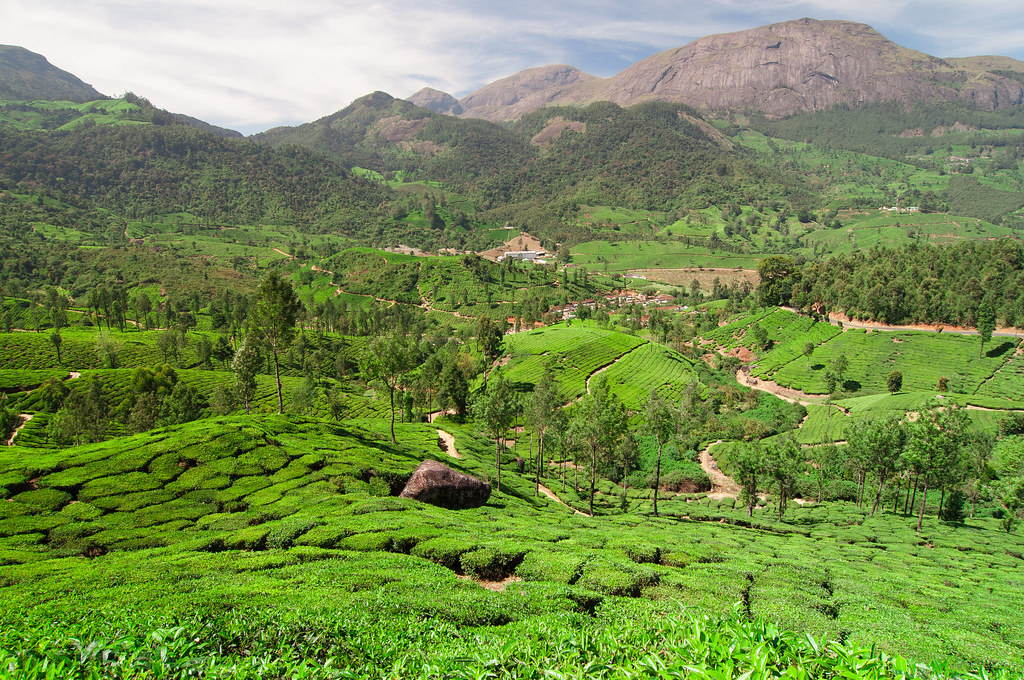 Tea plantations of Munnar. Sorry for colors, my laptop here is not for pictures.