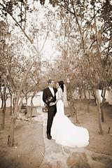M Shadows Wedding Exif   Wedding M Shado...