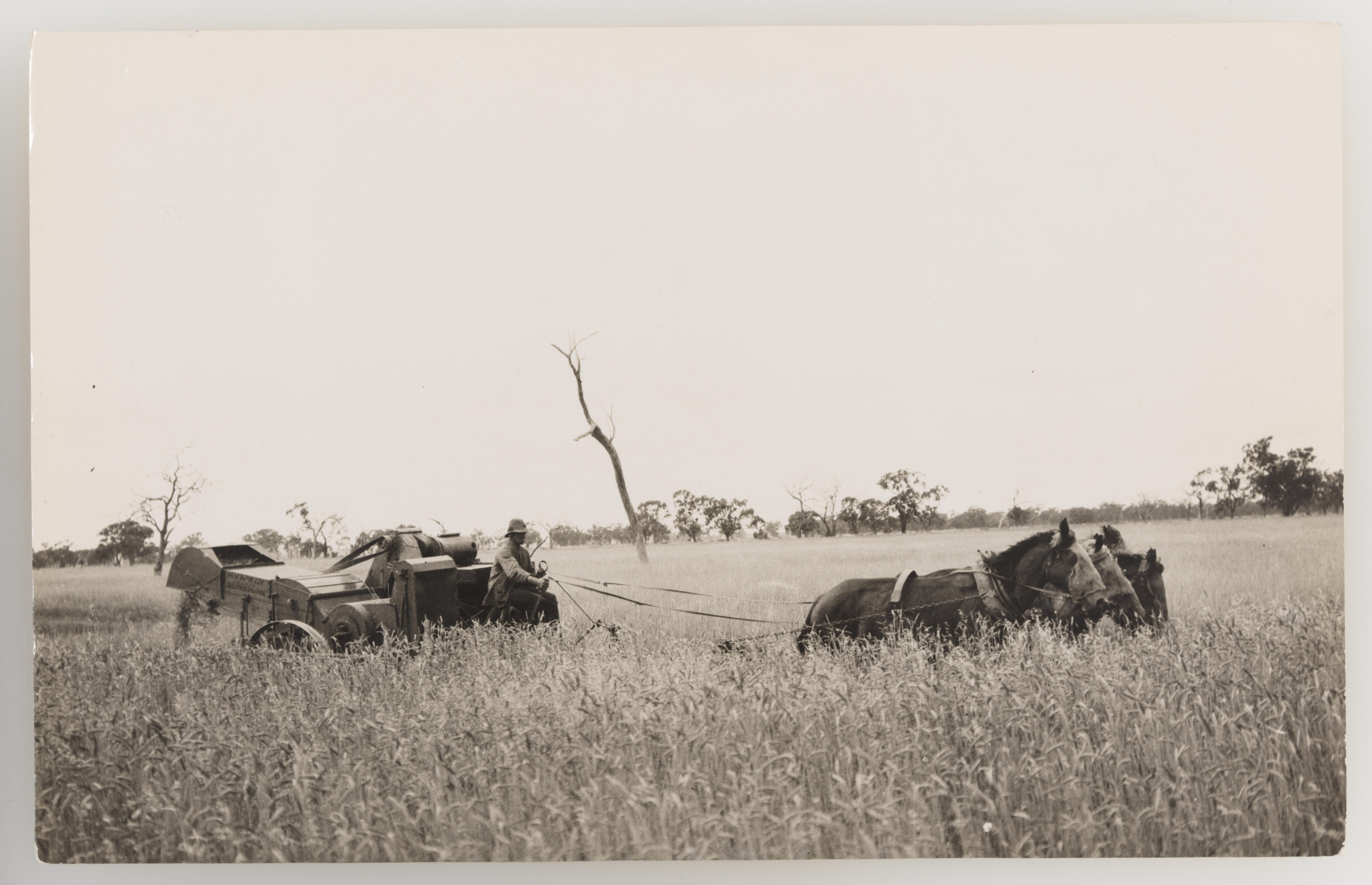 Sunshine header  from Photographs collected by Rev. James Colwell portraying rural and agricultural scenes and activities - Series 03: Harvesting, 1921-1924