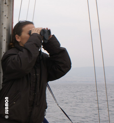 Estudio de cetáceos con avistamiento directo
