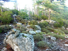 Boucle de la bergerie de Biancarellu : retour à la piste par le sentier cairné