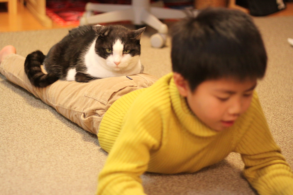 cat / black and white / with kids
