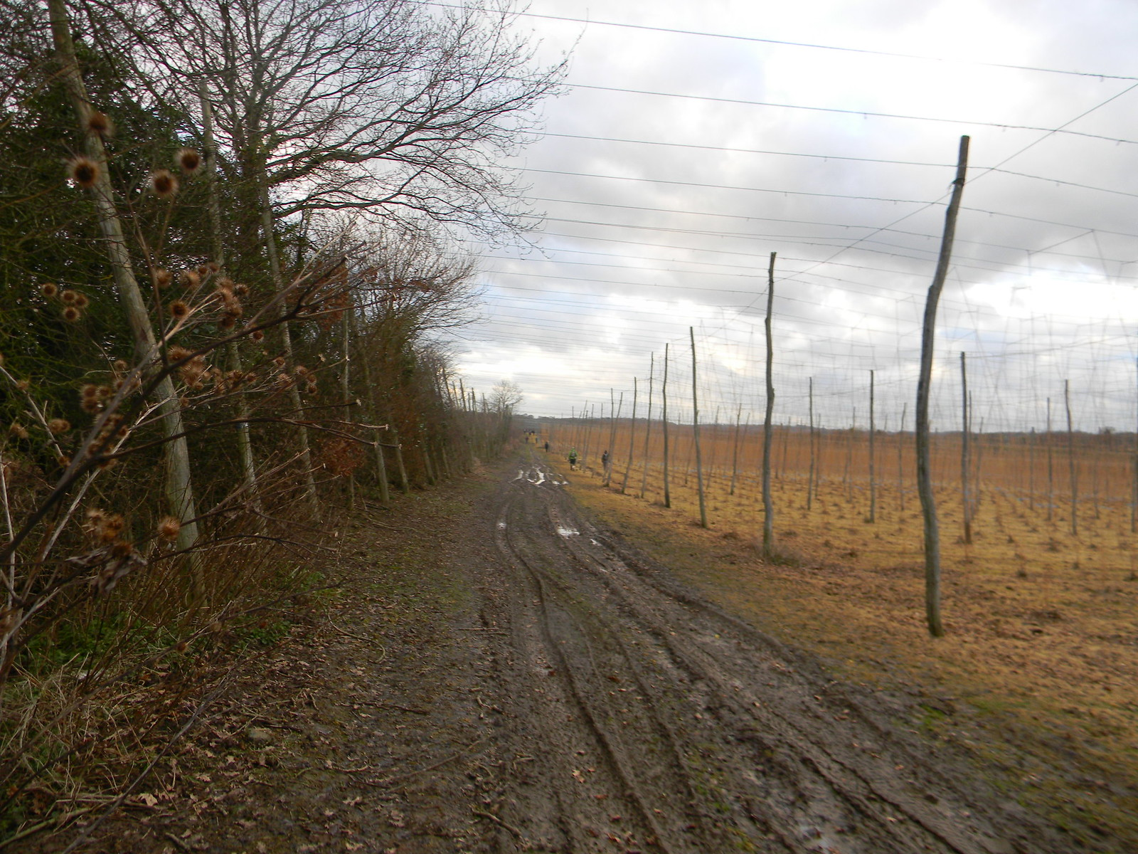 Hop poles After point 8....Stonegate Circular