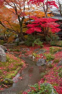 Autumn colours and stream, garden of the Tenryuji Temple, Kyoto