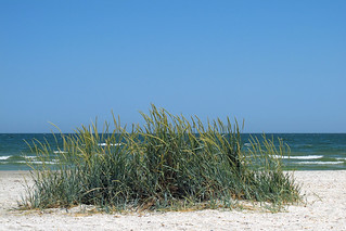 Savage beach (AP4H1239 1PS)