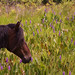 I was lucky enough to get this shot of a wild horse at Paynes Prarie entered in the Florida State Parks contest.  If you get a few seconds could you vote for me in the contest.  It would be much appreciated.  Thank you all so much for the support. by +Lonnie & Lou+