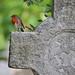 Robin, Brompton Cemetery, London by Richard Wintle