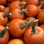 Pumpkins At Matarazzos