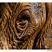 WWF-Canon Pic of the Week - Elephant Eye