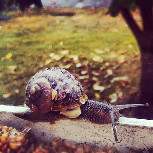 Snail friend came out of hiding to enjoy the rainy day.