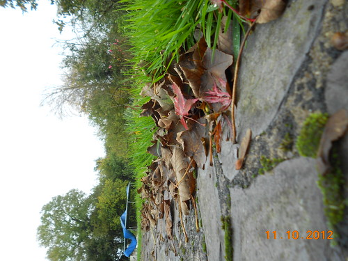 Photo 5;Leaves