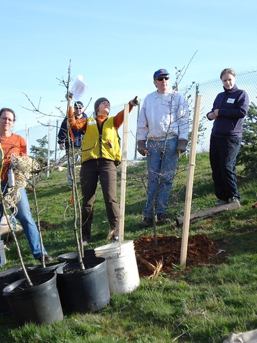 8096932717 47b9b93c6c Portland urban forester offers vision, leadership & a love of trees