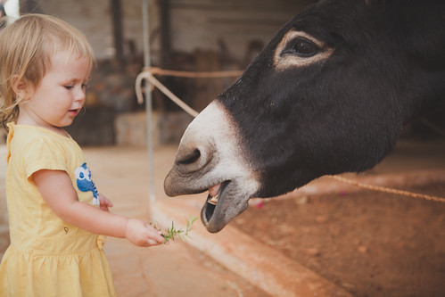 Daughter and donkey