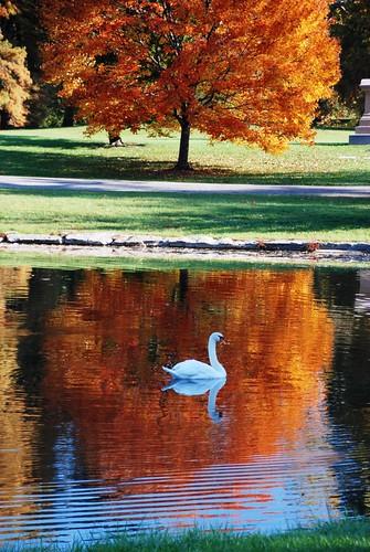 137e autumn glide
