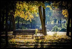 Goldener Herbst ... 293/366