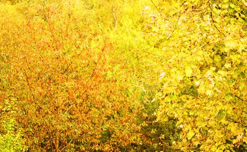 Autumn by Helen in Wales