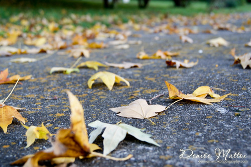 Leaves on my driveway