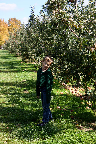Nat-apple-orchard