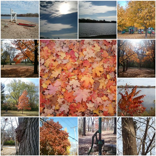Autumn Walkies mosaic
