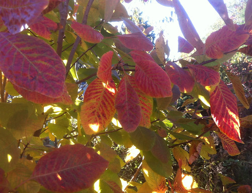 Sunlight on Bright Leaves by randubnick