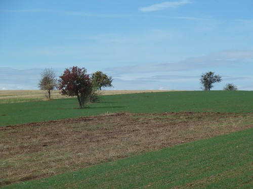 Fields and trees by mattkrause1969