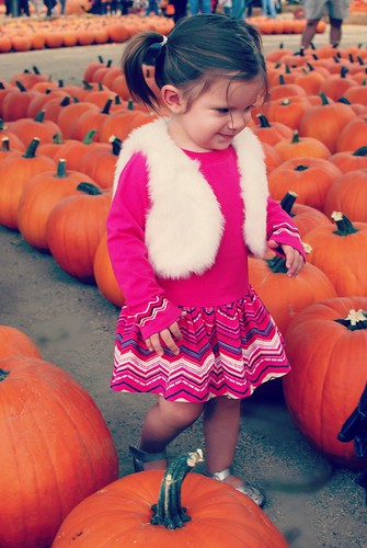 Lex Pumpkin Patch