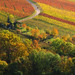 Indian Summer - Fall in the Vineyard