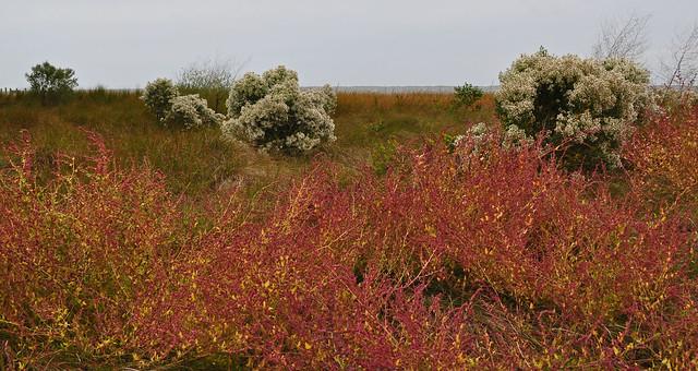 Metompkin Bay (4)
