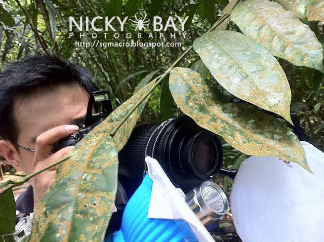 Me Shooting the Mantisfly - nicky_mantidfly1