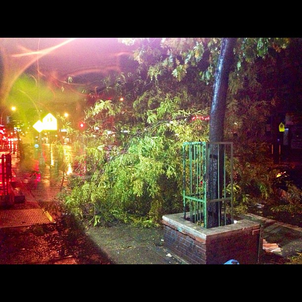 Fallen tree in Alphabet City / #EastVillage - Ave C near 9th + 11th St. #NYC #Sandy