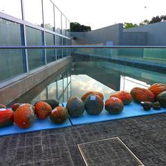 Kyoto Pumpkins