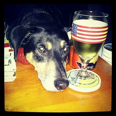 Tut wants #wine too! #unhappy #noelectricity #Sandy #dogs #hound #dogstagram