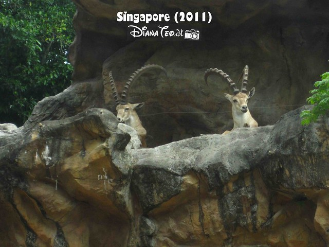 Day 3 Singapore - Zoo Singapore 13