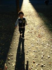 朝の光を浴びるとらちゃん、こっちくる (2012/11/2)