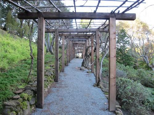 Hakone Japanese Gardens, Saratoga, CA IMG_2370