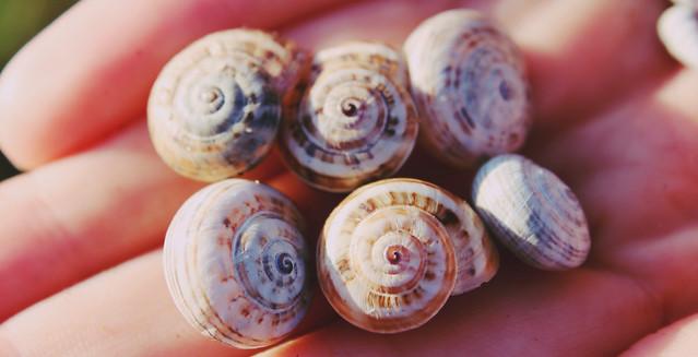 snail shells 5