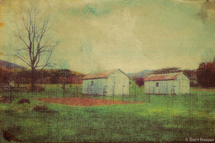 two old barns