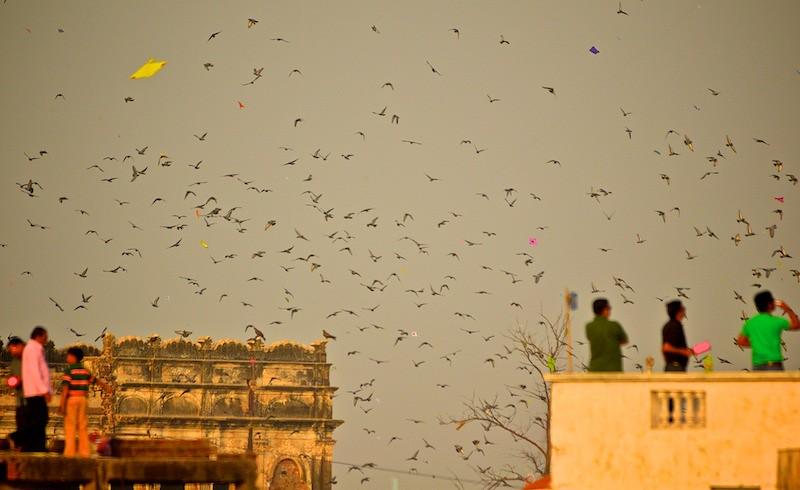 Kite Flying Festival Makar Sankranti Uttarayan 2013 Flickr
