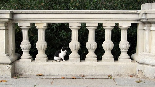 Retiro cat (cropped)